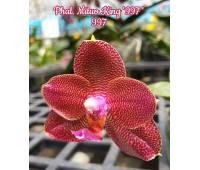 Phalaenopsis Mituo King '997'