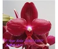 """Phalaenopsis Sogo Relex """"Sogo F1671"""""""