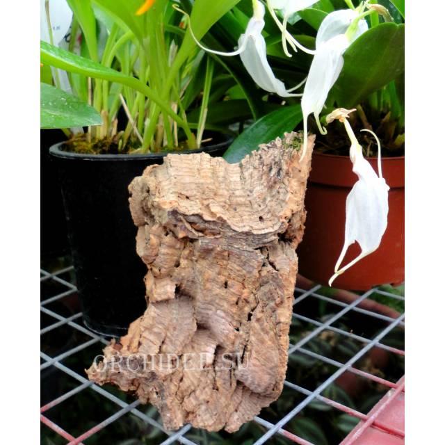 Блок №6 'MINI'' из коры пробкового дуба W=6-11 см, H=4-7 см.