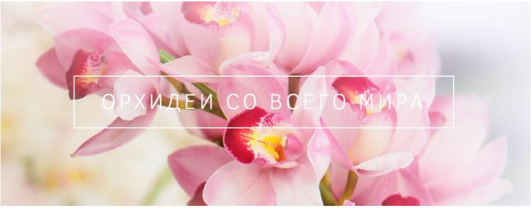 Орхидеи со всего мира