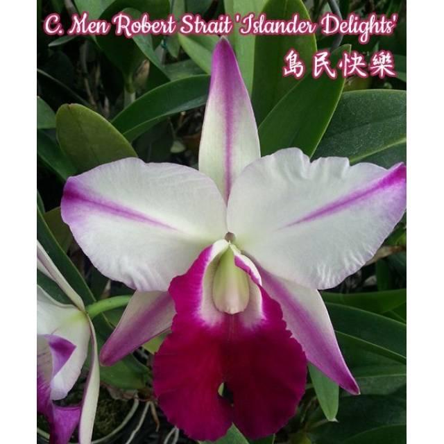 Cattleya Men Robert Strait 'islander Delights'