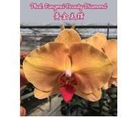 Phalaenopsis Fangmei Beauty Diamond