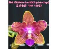Phalaenopsis Miki Golden Sand '1363' (peloric - 2 eyes)