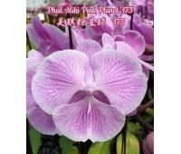 Phalaenopsis Miki Pink Planet '173'