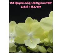 Phalaenopsis (Tying Shin Melody x KS Big Johnson)