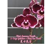 Phalaenopsis Summer Breath (Sogo Yukidian x Chian Xen Pearl)