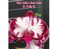 Phalaenopsis Fuller's Mask 'Smile'