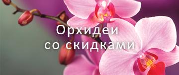 Орхидеи со скидками